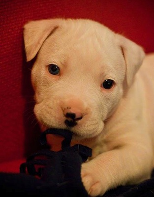 Puppy Nibbling