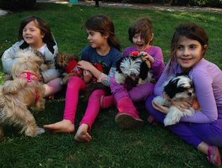 Jazzy and pups
