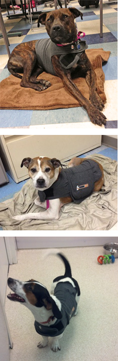 Summer, April, and Penelope enjoying their Thundershirts