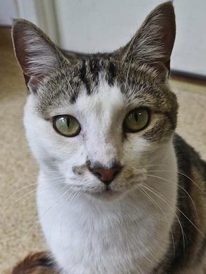 kitty-adopt