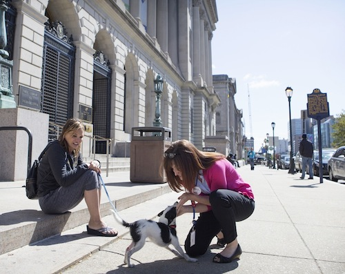 PAWS-Free-Library-BTS-02
