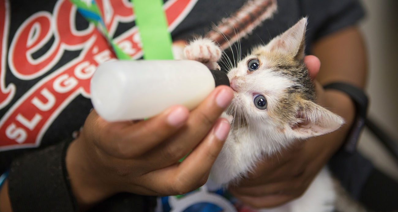 Join The Kitten Relay A Team Effort To Save The Smallest Kittens